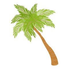 Date palm icon. Cartoon illustration of date palm vector icon for web