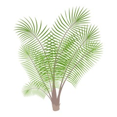 Bamboo palm icon. Cartoon illustration of bamboo palm vector icon for web