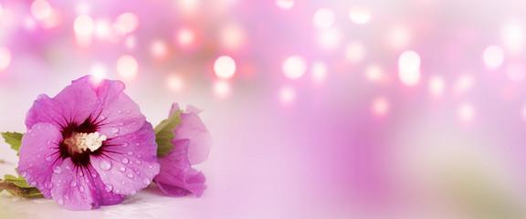 Panorama with purple hibiscus