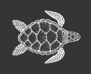 Sea turtle in line art style. Hand drawn vector illustration. To