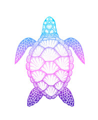 Sea turtle in line art style. Hand drawn vector illustration iso