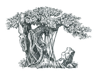 Дерево баньян на камне.