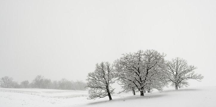 Snowfall Jo Davies County Illinois