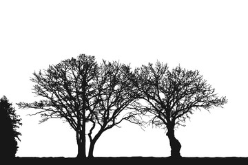 Realistic trees silhouette (Vector illustration).eps10