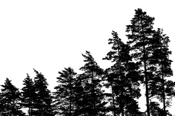 Pine tree silhouettes isolated on white