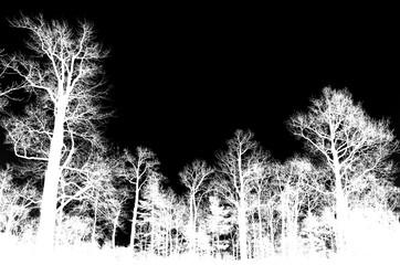 Leafless bare trees isolated on black
