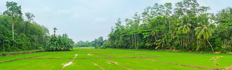 The farms of Sri Lanka