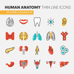 Anatomy Thin Line Vector Icons Set with Human and Internal Organs