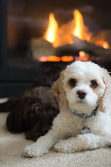White and brown dogs snuggling in front of fireplace