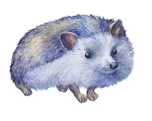 Prickly hedgehog . Hand painted watercolor illustration isolated on white background.