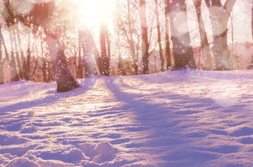 Winter snow magic forest background.