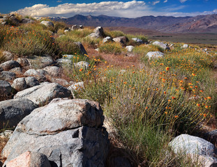 Arid Wilderness of the Eastern Sierras