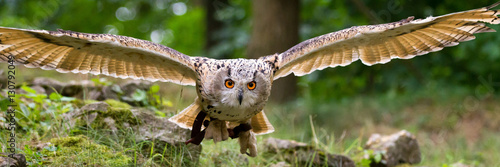 Wall mural flying eagle owl
