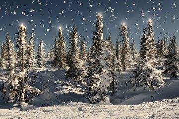 spruce forest snow snowflakes stars
