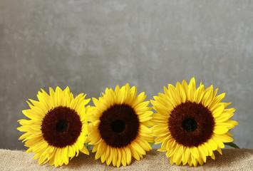 Fototapete - Sunflowers on wood