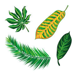 Tropical Leaves Collection. isolate vector. Beautiful Set. Detiled illustration Eps 10