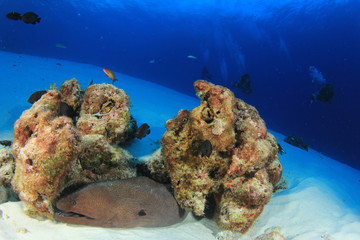 Scuba divers exploring coral reef