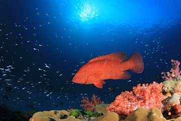 Coral reef underwater with fish in ocean