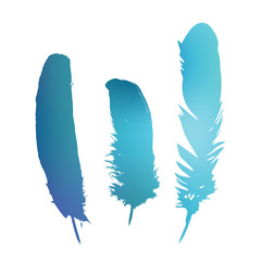 Colorful vector feathers in isolated white background