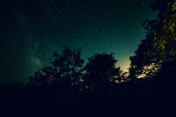 Night forest with starry sky and silhouette of trees or forest in the night with bright stars