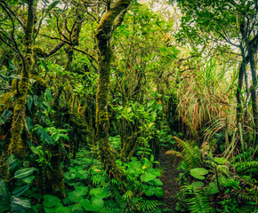 Wild green jungle