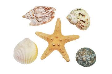 Starfish and seashells closeup