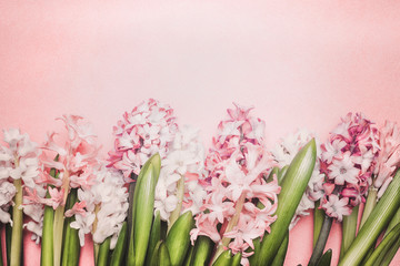Hyacinths flowers on pastel pink background, top view. Springtime and gardening concept