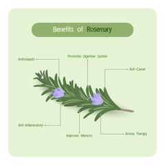 Infographic for rosemary benefits with handwriting font style