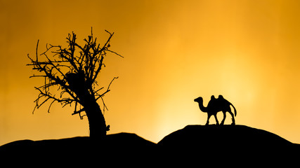 Camel shadows at sunset