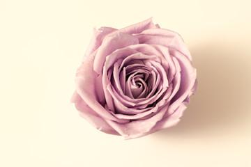 Valentinstag - Rose - Herz