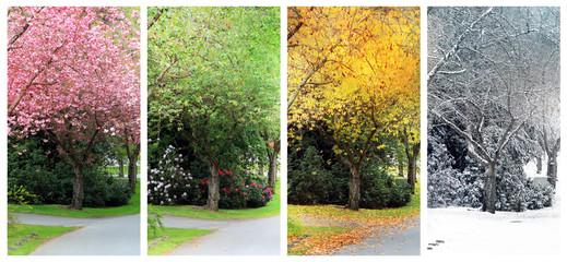 Four seasons on the same street. Wall mural