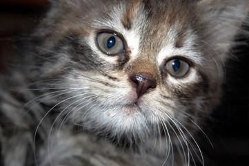 Portrait of a cute  young cat closeup