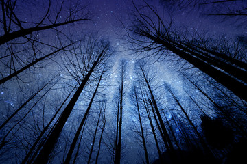 Photo sur Plexiglas Univers perspective of the dark outline of the dry forest with starry night background