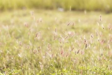 Grass flower and sun light
