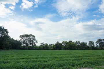 nature,farm,field