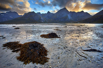 the stranded seaweed near moskenes  with the stunning sunset and beautiful mountain