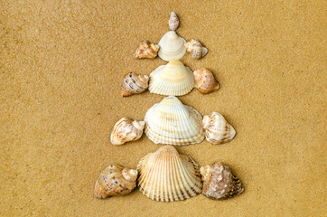 Christmas tree made of shells on the wet sand