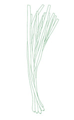 Spring onions line art on the white background