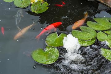 Bilder und videos suchen gartenteich for Koi fische im gartenteich