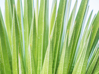 Abstract nature background. Green leaves texture for stripes pattern