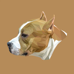 Stafford dog animal low poly design. Triangle vector illustration.