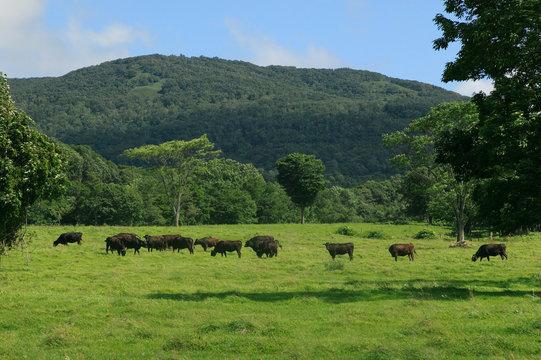 黒毛和牛の牧場