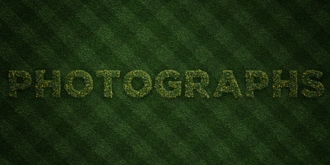 PHOTOGRAPHS - fresh Grass letters with flowers and dandelions - 3D rendered royalty free stock image. Can be used for online banner ads and direct mailers..