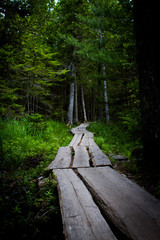 A forest path for introspection
