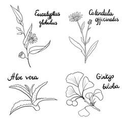 vector set of medical plants