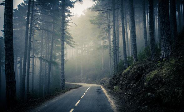 Brouillard et foret