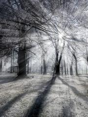 Winterwald mit Raureif im Gegenlicht