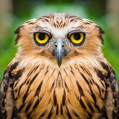Owl face close up
