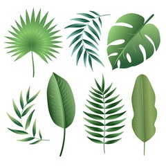 Vector set of tropical leaves. Palm leaf, banana leaf. Jungle trees.Botanical (floral) illustration