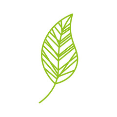 leaf drawing isolated icon vector illustration design